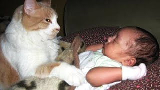 Cute Cats Takes Care Of Babies 😂 Funny Baby and Pets Moments
