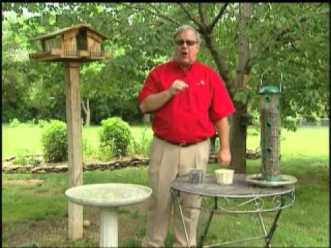 Attracting Cardinals to your backyard By GardenAccentHeaven.com