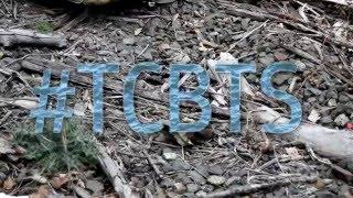 TCBTS