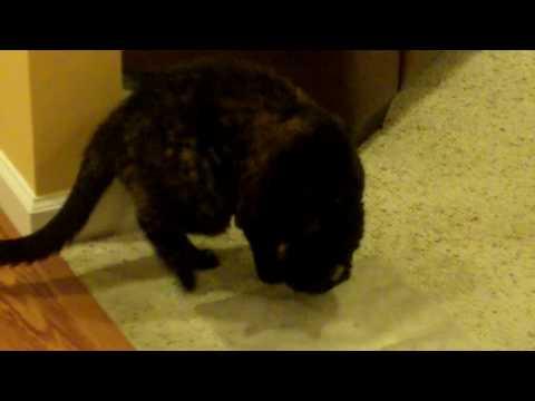 Cat Steps On Shock Mat