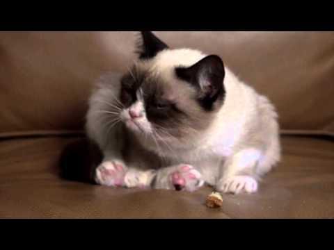 Tardar sauce (A.K.A. Grumpy cat)