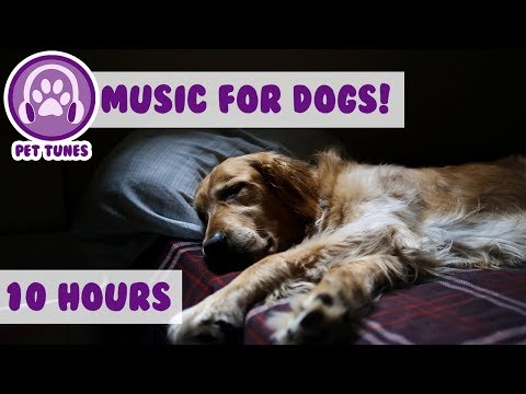 10 hours! Music for Dogs! Help Separation Anxiety, Soothe Your Puppy Calm and Relax Your Dog