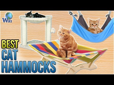 10 Best Cat Hammocks 2018