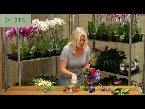 Battle of the Florist Comp - Live from Flowers for Everyone Sydney HQ