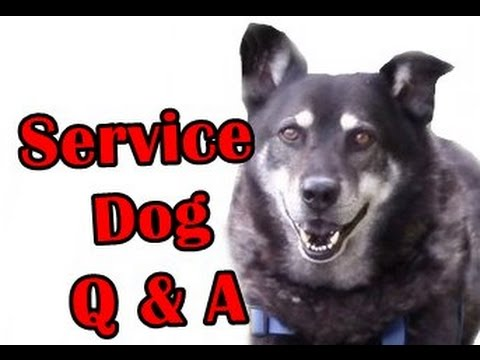 Can you get a service dog for ADHD or ADD [ Q&A #14