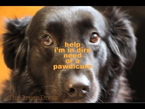 1 GD Minute: DIY Dog Paw Remedy Salve