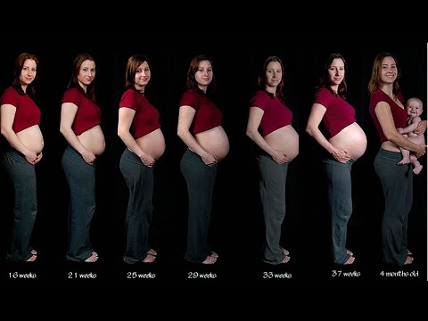 Stages of Pregnancy | How to Understand the Stages of Pregnancy
