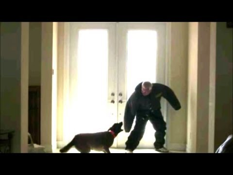 Will a Trained Protection Dog actually protect your house?