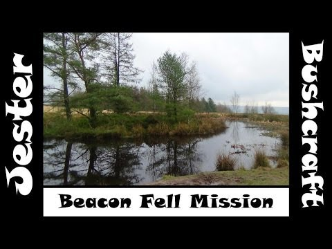 Bushcraft - Collecting Pine Resin At Beacon Fell Country Park