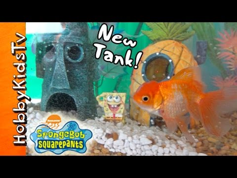 HobbyFish + SpongeBob in NEW TANK! Bikini Bottom Fish Tank by HobbyKidsTV