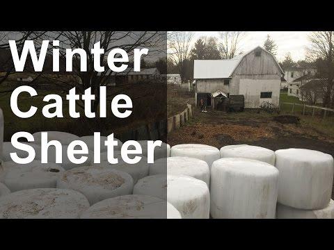 Winter Cattle Shelter
