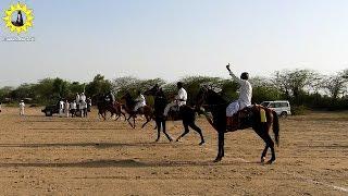 Sanchore,Rajasthan Fair horse 2017 Horse ki race rewal  (pat2)