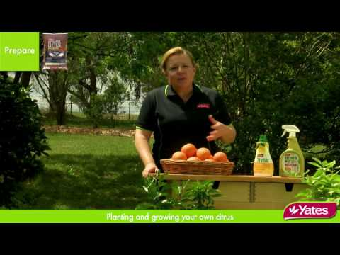 CITRUS - How to grow Citrus trees in gardens and small spaces