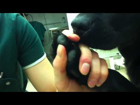 How to clip dark coloured dog claws