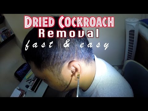 Dried cockroach removal fast & easy