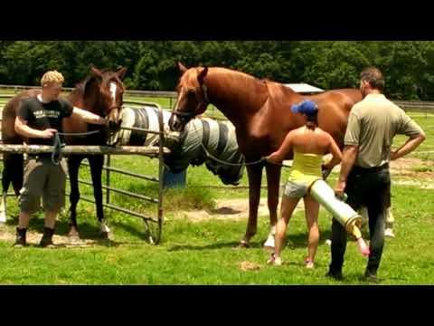 Xxx Mp4 Proses Mengawinkan Kuda Di Eropa Betina Hanya Untuk Pancingan Saja 3gp Sex