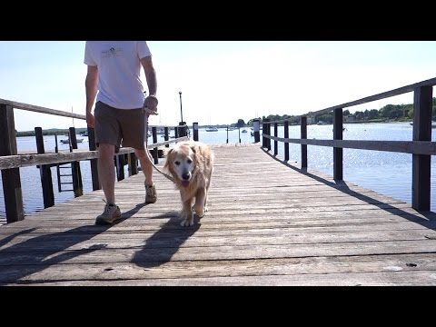 How to splice a dock line (rope) into dog leash