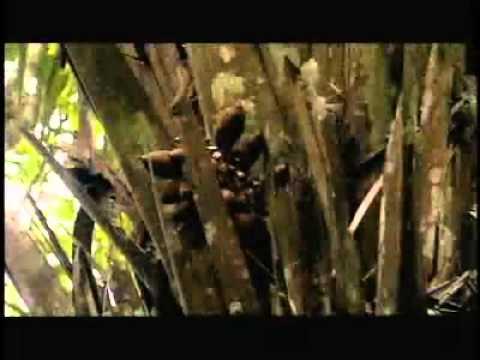 Jungle Surviving Finding Food And Water (Mayke Hayke)