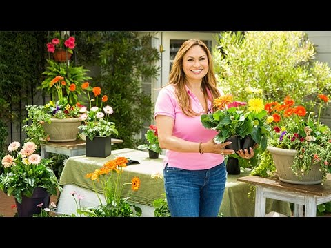 Home & Garden - Gerbera Daisies 101 with Shirley Bovshow - Hallmark Channel