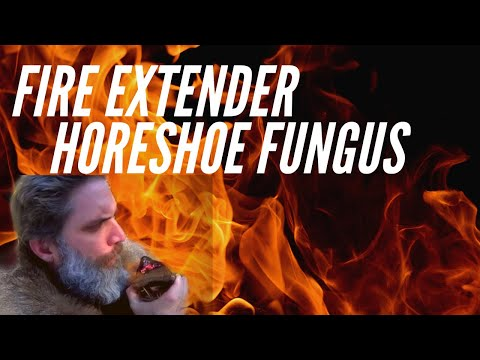 Fire From Horseshoe Fungus or Tinder Fungus