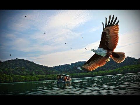 Langkawi Tour   Mangrove River Safari (Day-2)