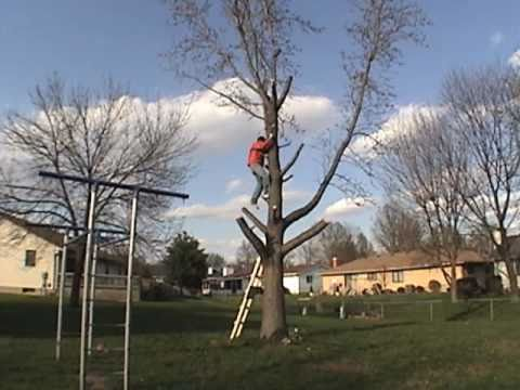 DIY Tree Removal - How to Cut Down a Tree