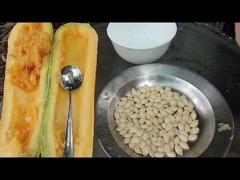 How to save Zucchini / courgette seeds.. Also works for squash & pumpkins..