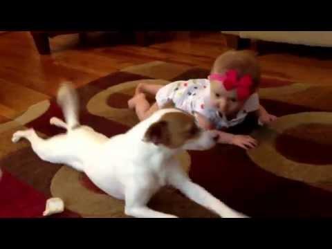 Buddy's Baby Crawling School