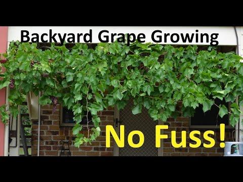 No Fuss Backyard Grape Growing Pruning Propagating
