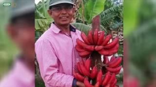 Meet Ram Saran Verma from Barabanki in Uttar Pradesh a.k.a the Banana King