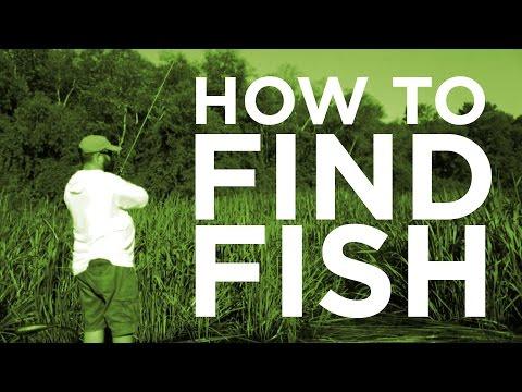 Bass Fishing - Finding Summer Bass