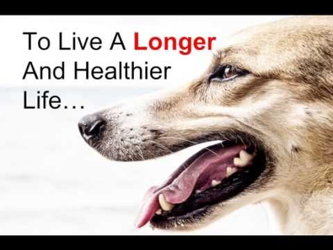 3 Out of 4 Dogs Will Get Gum Disease In Their Lifetime