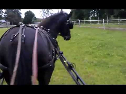 Training My Horse to Drive - First Time in the Cart!