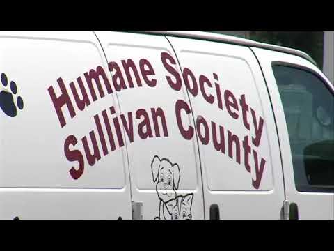 Sullivan County Animal Shelter full