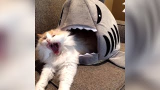 WAKE UP PETS! - Funniest ANIMAL VIDEOS