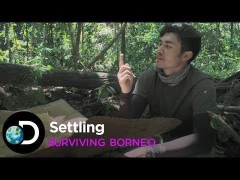 Settling | Surviving Borneo
