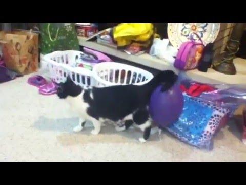 Static Electricity cat Santa. Funny video