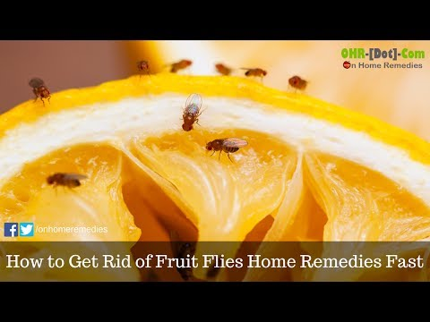 How to Get Rid of Fruit Flies Home Remedies Fast