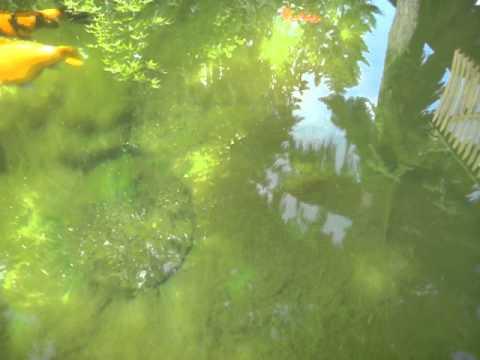 Pond full of string algae