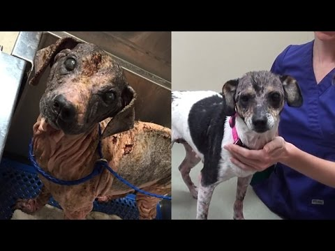 Severely Neglected Puppy with Scabies, Mange Makes Stunning Recovery