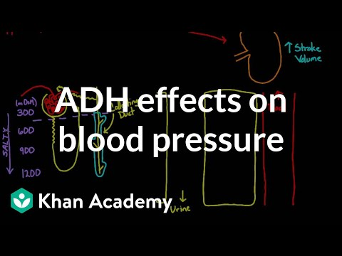 ADH effects on blood pressure | Renal system physiology | NCLEX-RN | Khan Academy