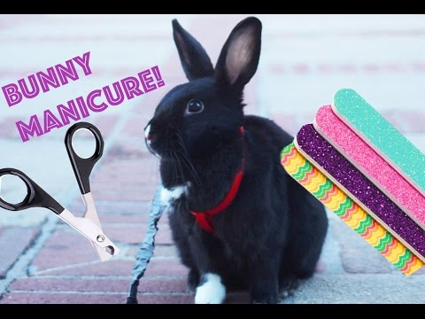 Bunny Manicure (How to Trim Your Rabbit's Nails)