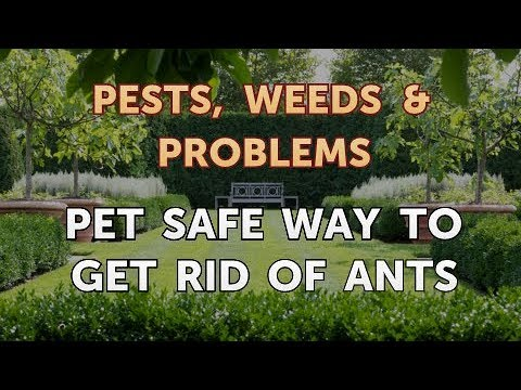 Pet Safe Way to Get Rid of Ants