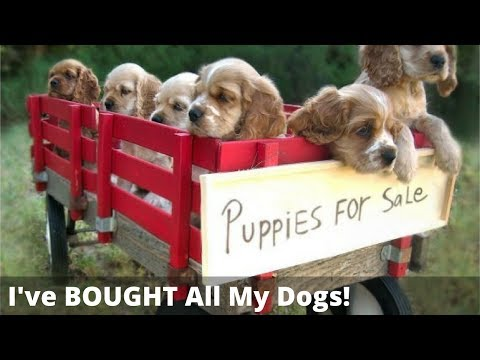 Should You Adopt A Dog Or Buy A Puppy? Is It REALLY Cruel To Buy A Dog?