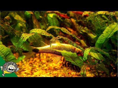 Aquarium Plants Dying Plant Deficiencies Plants 101