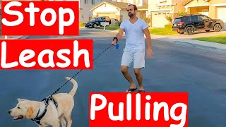 Leash Pulling - How to Train your Dog/Puppy to Stop Pulling Leash and Walk with You (Guaranteed)