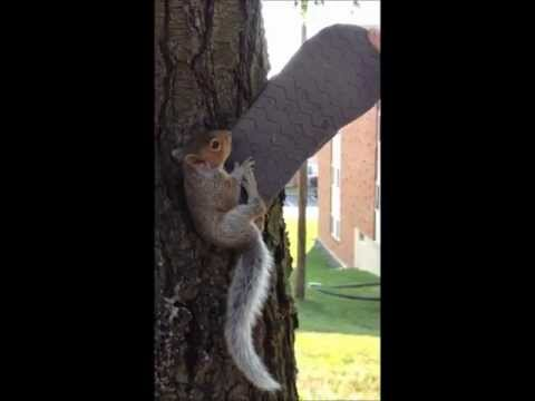 How to save a baby squirrel