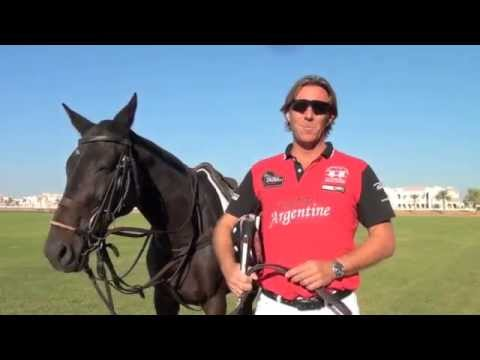 Learn how to play polo, The Essential Guide by Steve Thompson.