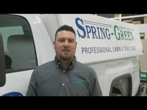 Lawn Care, Tree Care & More in Silverdale, WA | Spring-Green
