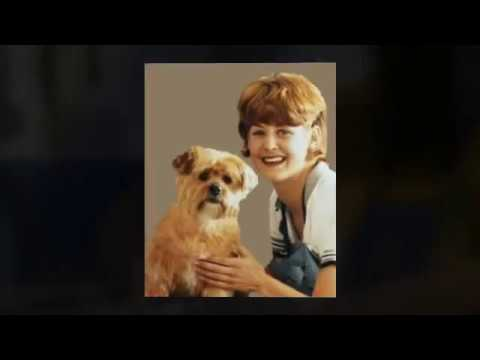 ))) Free Dog Grooming Mini Course | Secrets of Professional Dog Groomers